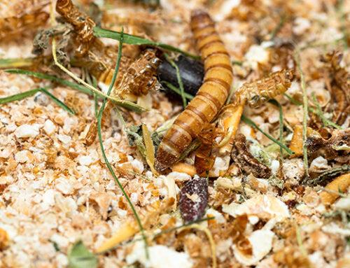 Une offre dédiée à la production et la transformation d'insectes